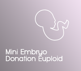 Mini Embryo Donation Euploid