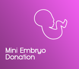 Mini Embryo Donation